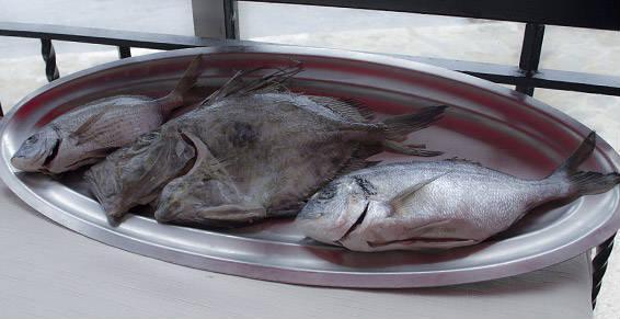Spécialité poissons, bouillabaisse, coquillages.