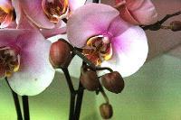 aux fleurs de l'aulne 229.JPG