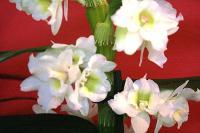 aux fleurs de l'aulne 202.JPG