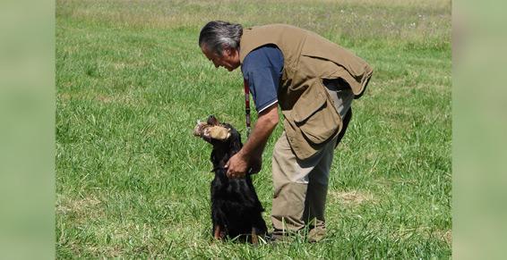 Préparation des chiens de chasse - Pensions pour chiens
