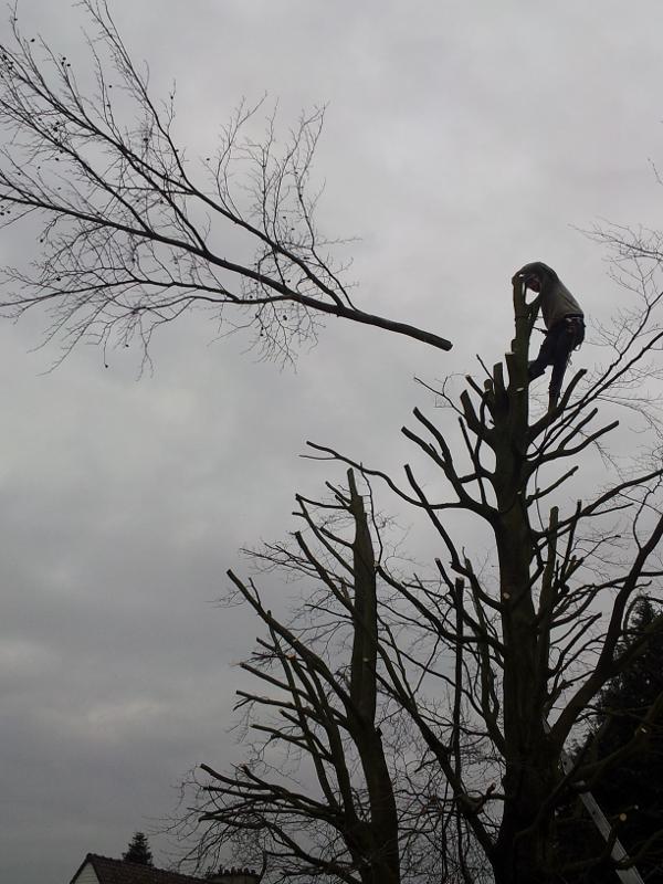 La Maison du Jardin vous propose ses services pour l'élagage d'arbres