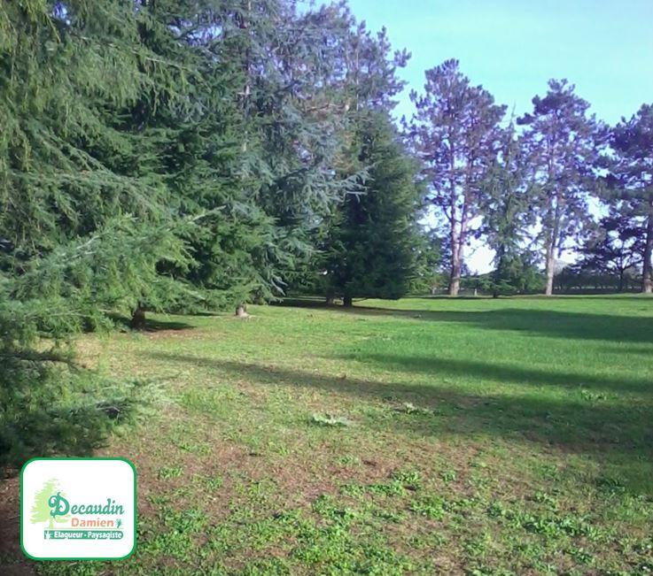 Tonte de votre pelouse et entretien de jardindans les Deux-Sèvres (79)