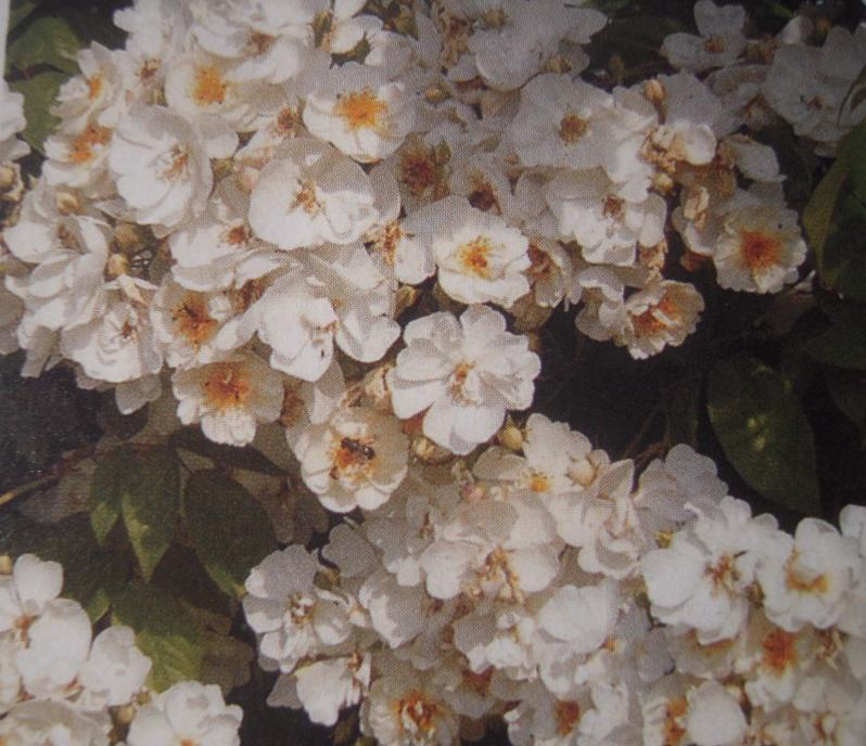 Bobbie James rosier liane