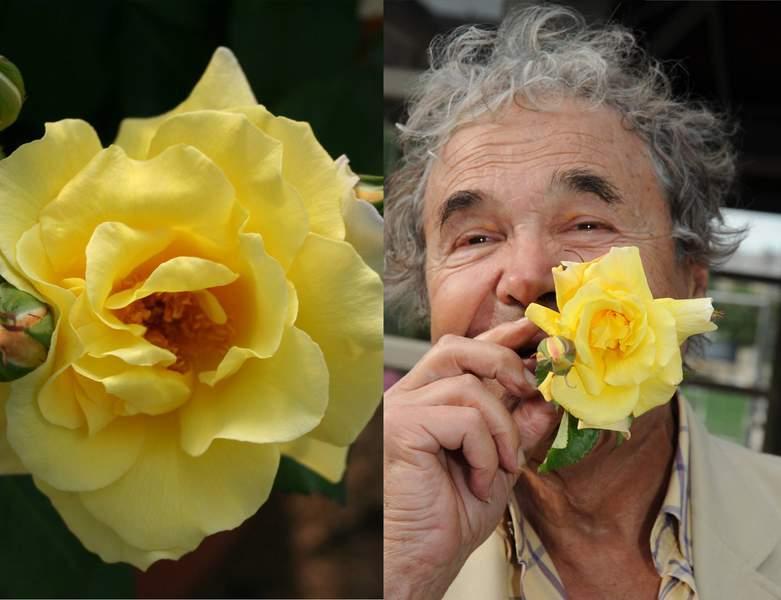 Pierre Perret rosier buisson