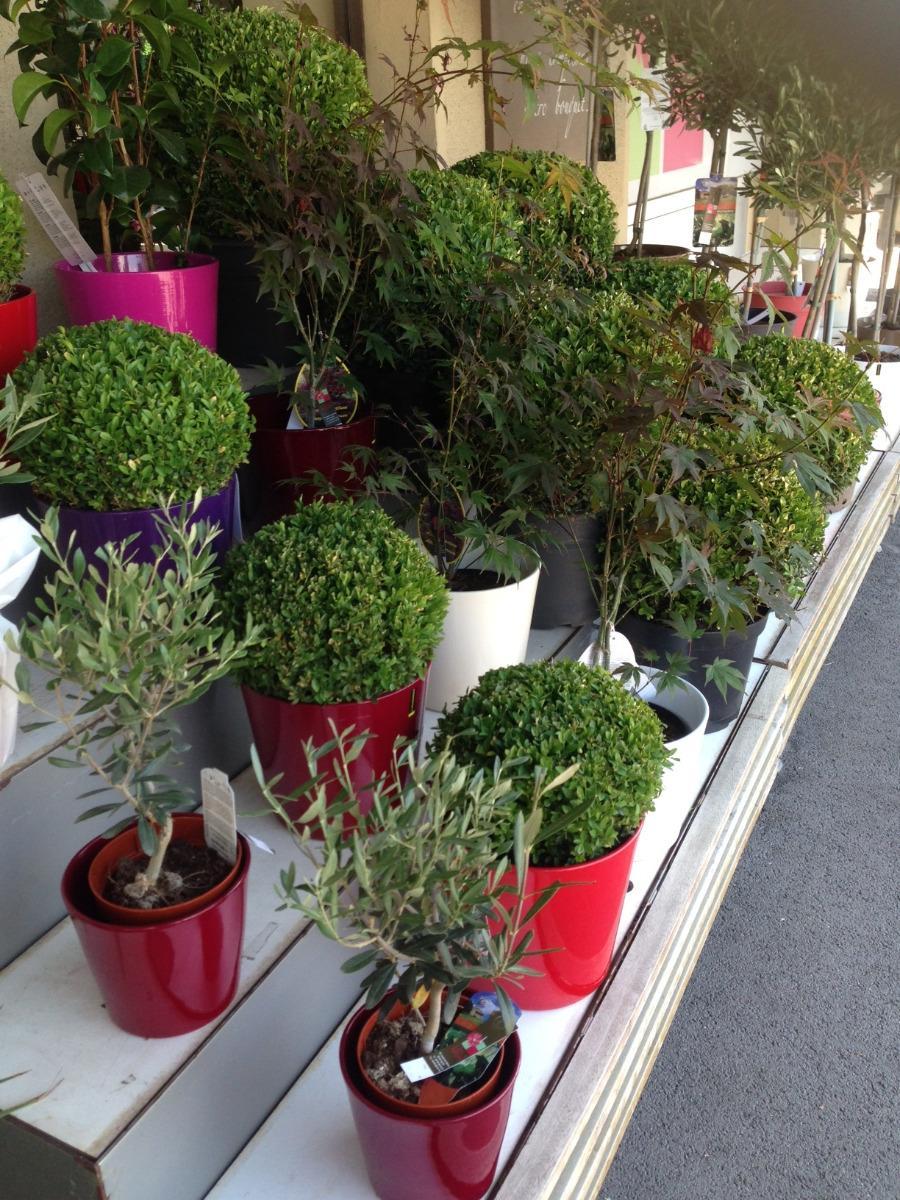 Lola Fleurs vente d'arbustes à Ales