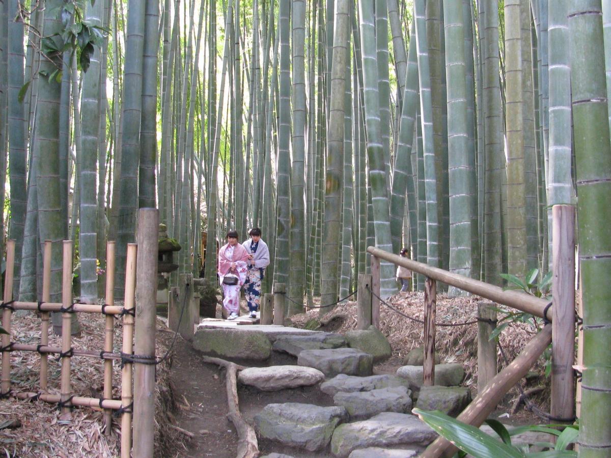 JAPON 2014 temple des bambous Kamakura