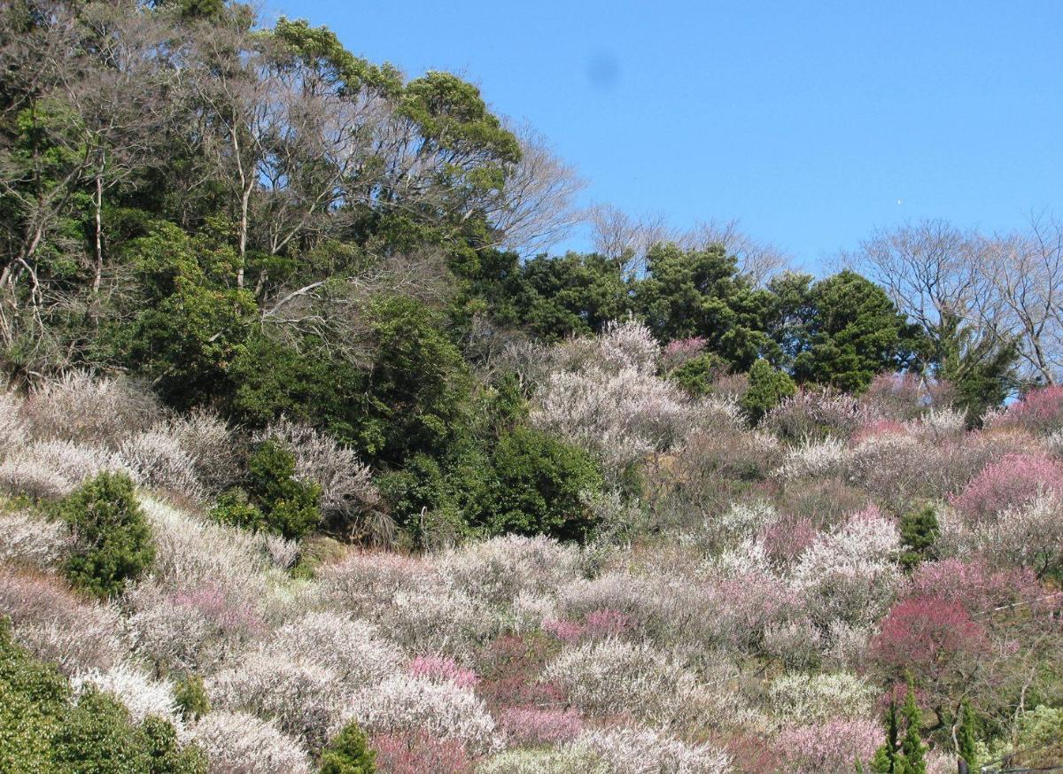 Jardin de Umeda San a Shizuoka Photo Bonsai Barber