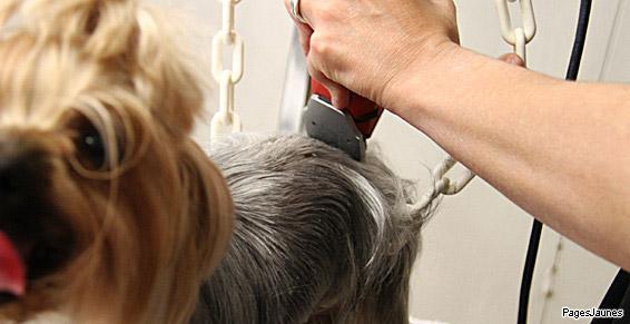 Boule de Poils, spécialiste du toilettage de chiens et de chats