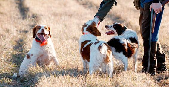 Neuville Angelique - Toilettage de chiens