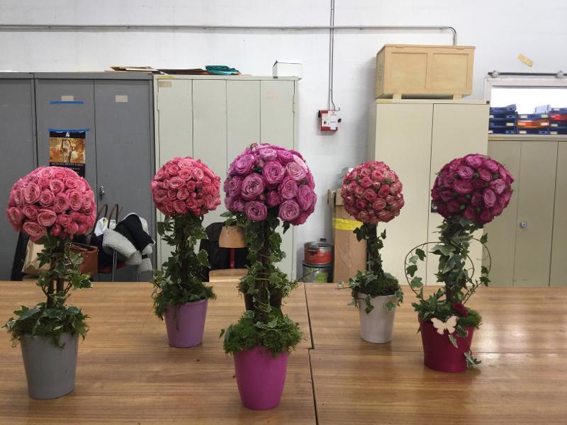 Topiaire de roses