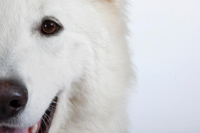 Élevage des Terres d'Azade, pension pour chiens