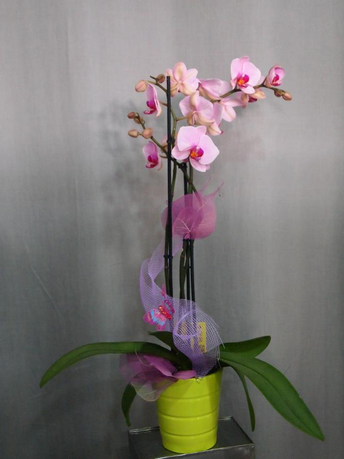Pot orchidée décoré : 29€