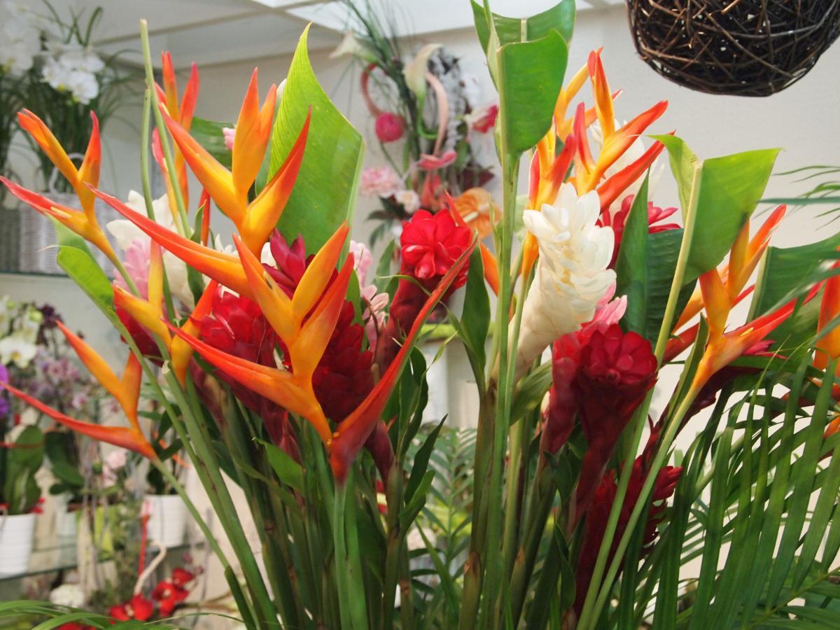 Fleurs exotique : composition de bouquet a partir de 30€