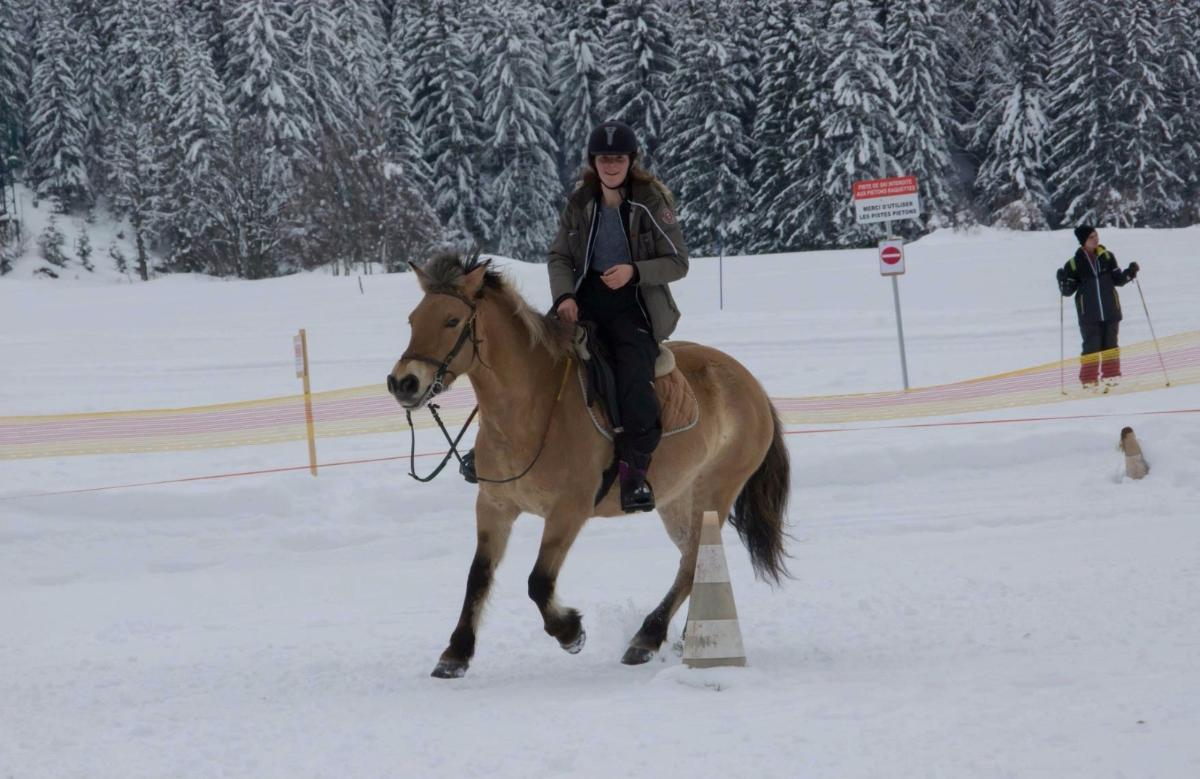 cour d'équitation et ballade à cheval  hiver comme été