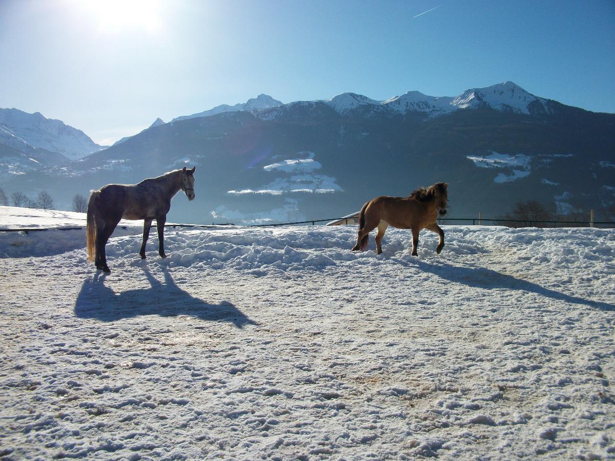 les chevaux sur la neige