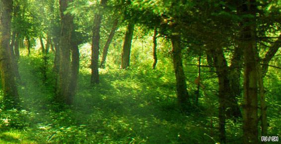 Sylviculture_travaux_fôrets_bois_arbre_SH_130211.jpg