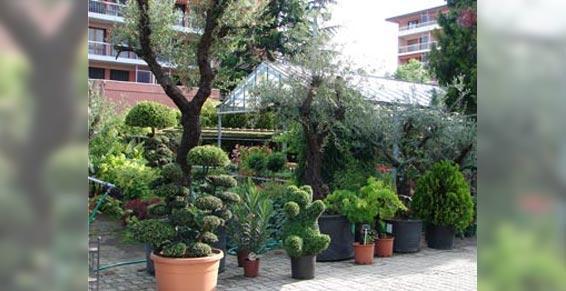 horticulteur - Arbres a replanter