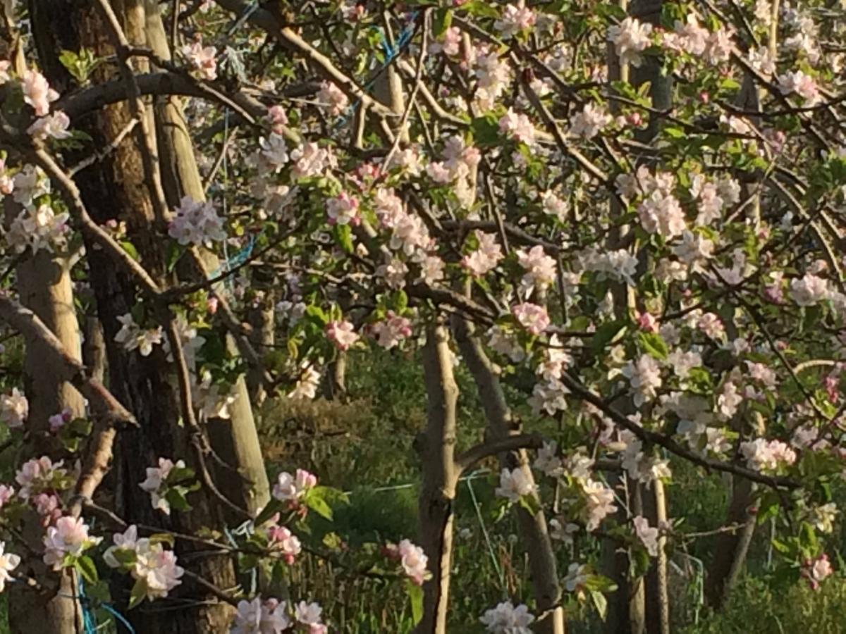 Daudet Fruits à Pessines - Arboriculture, production de fruits