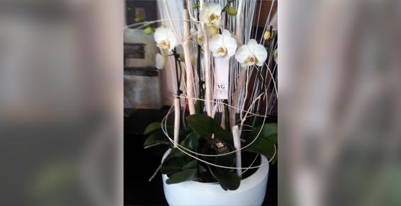 Grands choix de plantes vertes ou fleuries, nombreuses orchidées