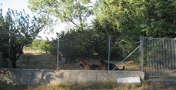 Chenil du Plan : pension chiens, un des 4 parc d'ébats dans le Var