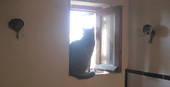 Chat en pension à la fenêtre dans les Bouche du Rhône
