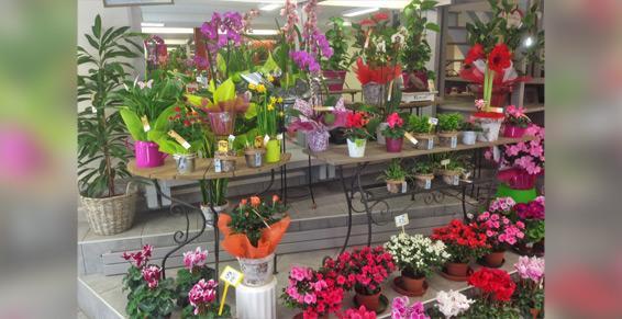 Métais Fleurs - Plantes d'extérieur