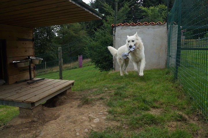Pension pour chien à la ferme Zoonat