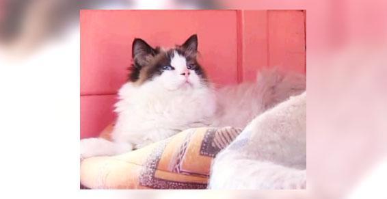 Box pour chats Mizerieux 42